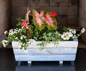 Whitewash Planter